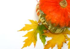 Free Autumn Setting Stock Photography - 316262