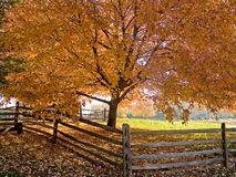Autumn Shade. A beautiful shade tree and fence at the peak of Autumn colors royalty free stock image