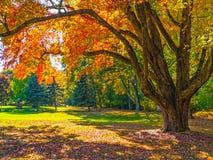 Autumn Shade Tree Stock Photography