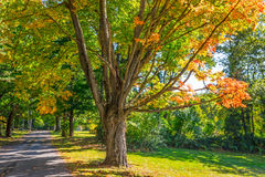 Autumn Shade Trees Stock Images