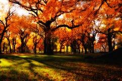 Autumn Shades. Dramatic shades of colorful auburn leaves Royalty Free Stock Photo