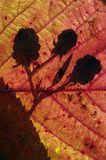 Autumn Shadow #1 Royalty Free Stock Images