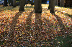 Autumn shadows Royalty Free Stock Photography