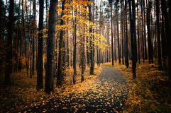 Autumn in the shady forest with the road, Russia, Ural stock photo