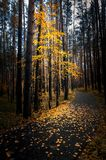 Autumn in the shady forest with the road, Russia, Ural stock image