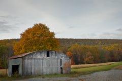 Autumn shed Stock Image