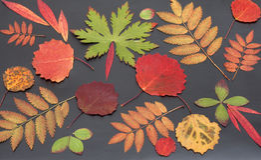 Autumn sheet Stock Photography