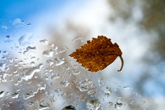 Autumn sheet. stock photography