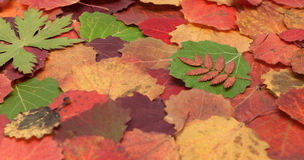 Autumn sheet background Royalty Free Stock Photography