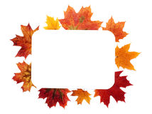 Autumn sheet by frame Royalty Free Stock Images