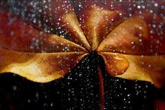 Autumn sheet in rain. Autumn heet in rain on dark background royalty free stock photography