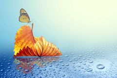 Autumn sheet tree with butterfly. In rain stock image