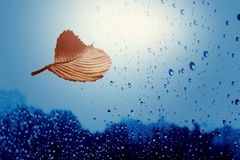 Autumn sheet tree flies in rain. Autumn sheet tree flies on background of the drop in rain stock photo