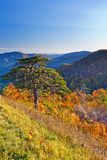 Autumn in Shenandoah National park Stock Image