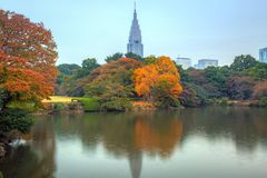 Autumn in the Shinjuku Park of Tokyo Stock Photography