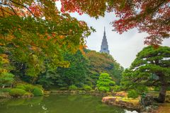 Autumn in the Shinjuku Park, Tokyo. Japan Royalty Free Stock Photo