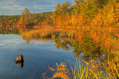 Autumn Shoreline. Of Hall Lake with reflections in calm water, Yankee Springs State Park, Michigan, USA Royalty Free Stock Images