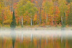 Autumn Shoreline Alberta Lake Fotografia de Stock