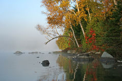 Autumn Shoreline - Haliburton, Ontario Arkivfoton