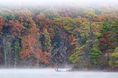 Autumn Shoreline Hall Lake in Fog Stock Photography