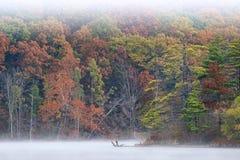 Autumn Shoreline Hall Lake in Mist Stock Fotografie