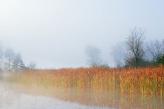 Autumn Shoreline Jackson Hole Lake. Autumn landscape of the shoreline of Jackson Hole Lake in fog with cattails and trees, Fort Custer State Park, Michigan, USA Royalty Free Stock Photo