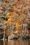 Autumn Shores Stock Foto