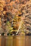Autumn Shores Imágenes de archivo libres de regalías