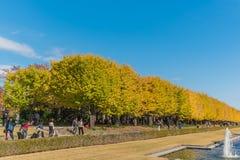 Autumn in Showa memorial park,Tachikawa,Japan stock photography