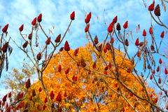 Autumn Shows uma perspectiva distinta Imagem de Stock