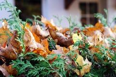 Autumn shrubs Stock Photo