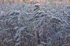 Autumn shrubs Royalty Free Stock Photos