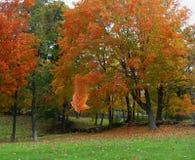 autumn się liście Fotografia Royalty Free