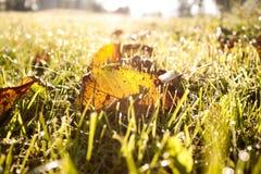 autumn się liście Zdjęcie Royalty Free