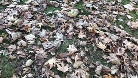 autumn si? li?cie zbiory wideo
