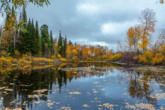Autumn in Siberia Stock Images