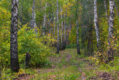 Autumn in Siberia Royalty Free Stock Photography