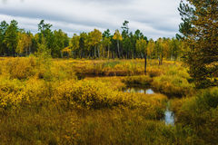 Autumn in Siberia Royalty Free Stock Images