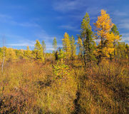 Autumn in the Siberian swamp Royalty Free Stock Photos