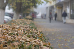 Autumn Sidewalk Immagine Stock