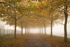 Autumn sidewalk with golden trees Royalty Free Stock Photos