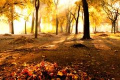 Autumn. In the Sielecki Park Stock Image