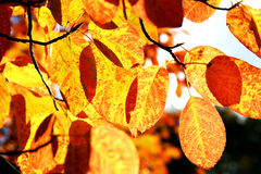 Autumn signs Royalty Free Stock Photo