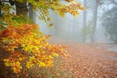 Autumn silence park with mist Royalty Free Stock Photo