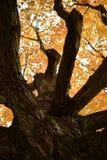 Autumn silhouette Stock Image