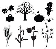 Autumn silhouettes. On white background, vegetables and tree Stock Images