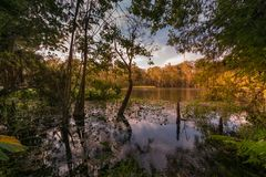 Autumn at Silver Springs State Park in Ocala, FL Stock Photography
