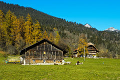 Autumn in the Simmental valley Royalty Free Stock Images