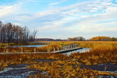 Autumn sketches on Horicon Marsh, Wisconsin. Autumn Landscape with a view of Horicon Marsh, Wisconsin Royalty Free Stock Photography