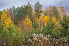Autumn. Sketches of autumn moments in Belarus Royalty Free Stock Photography
